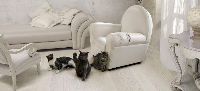 Что делать, если кот поцарапал диван