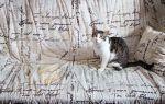 Как эффективно избавиться от запаха кошачьей мочи на диване